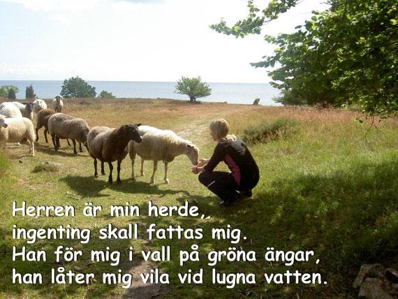Herde_570